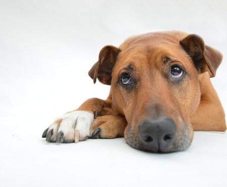 ¿Cómo suena el abandono y la esperanza? Royal Canin y SrBurns te lo muestran