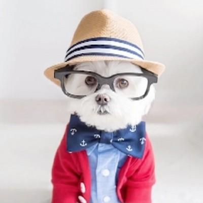 """""""Perros con experiencia"""" muestran sus habilidades en perfil de LinkedIn"""